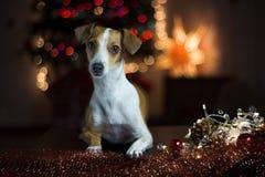 s psi nowy rok zdjęcia royalty free