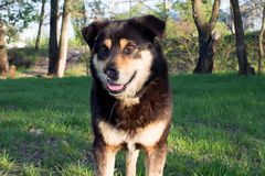 S?rad hund f?r tillf?llig byracka royaltyfria foton