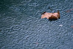 It's raining again. Drops in a puddle Royalty Free Stock Image