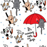 It's raining cats and dogs autumn card. Stock Image