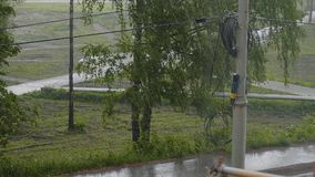 It`s raining hard outside. Street view from the balcony. Trees bend under gusts of wind. On asphalt flowing water. stock video