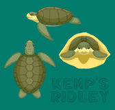 ` S Ridley Cartoon Vector Illustration de Kemp de tortue de mer Photos libres de droits