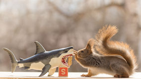 The s of shark Royalty Free Stock Photography