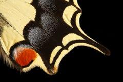 s skrzydła motyla zdjęcie stock