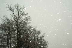 It's snowing royalty free stock image