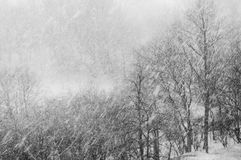 It's snowing!. View of a heavy snowfall Stock Images