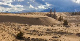 It`s snowing over the Siberia desert in spring royalty free stock images