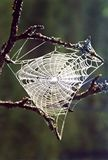 s-spindelrengöringsduk Royaltyfri Fotografi