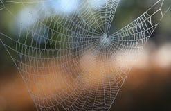 s-spindelrengöringsduk Arkivbilder