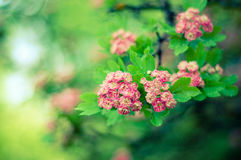 It's Spring Time Royalty Free Stock Images