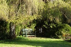 Green bench in sunlight beneath a weeping alder tree. It`s spring time, so the leaves are just coming out on the weeping alder tree that shelters the green bench stock image