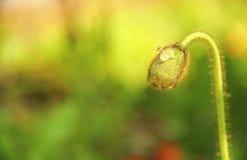 ` s un seme solo e tenace fotografia stock