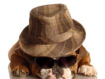s'user de chapeau en verre de bouledogue photo libre de droits