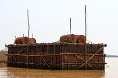 S?ve de Tonle, Cambodge image stock