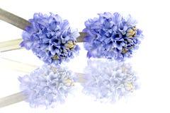 s wiosna czas Zdjęcie Royalty Free