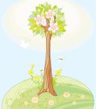 s wiosna drzewo Zdjęcia Stock