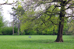 Saúde, bicicleta & jardim Fotografia de Stock Royalty Free