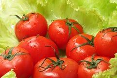 sałata świezi pomidory Zdjęcia Stock