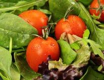 sałata pomidory zdjęcia royalty free