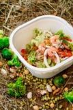 Sałatka z garnelą Zdrowa karmowa dostawa Bierze daleko od dla diety zdjęcia royalty free