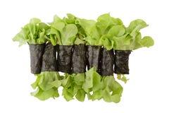 Sałatkowa rolki alga odizolowywająca na białym tle Zdjęcie Stock