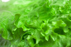sałaty świeża zielona sałatka obrazy stock