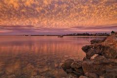 SA斑斑海湾桃红色 库存照片