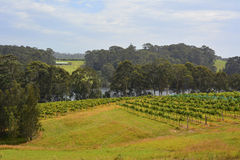 """1SA_3517 †""""Tilba Tilba,澳大利亚†""""2016年1月 酿酒厂在Tilba Tilba,新南威尔斯 免版税库存图片"""