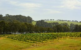 1SA_3517 †'Tilba Tilba, Australia †'Styczeń, 2016 Wytwórnia win w Tilba Tilba, Nowe południowe walie Obrazy Stock