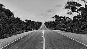 SA ατελείωτα οδικά δέντρα Στοκ Φωτογραφία