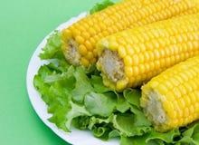 sałata kukurydzana Zdjęcia Stock