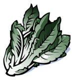 sałaty serii warzywa Obraz Royalty Free