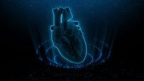 SA and AV Node signal in the Heart