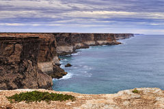 SA Cliff Plant foreground Royalty Free Stock Image