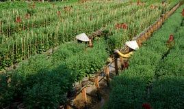 SA DEC,越南- 1月26 免版税库存照片