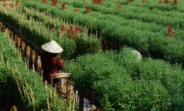 SA DEC,越南- 1月26 库存图片