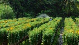 SA DEC,越南- 1月26 免版税库存图片