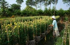 SA DEC,越南- 1月26 免版税图库摄影