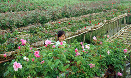 Litte girl with smile in the rose garden. SA DEC,  Royalty Free Stock Photos