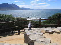 sa hermanus Obrazy Royalty Free