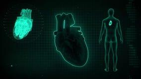 SA Nodes signal in the Heart or Sinoartial Node signal