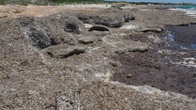 Sa Rapita, Μαγιόρκα Ισπανία Τοπίο στην παραλία ES Rapita που καλύπτεται με τα άλγη στο θερινό χρόνο φιλμ μικρού μήκους