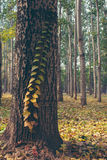 saa no tronco de árvore na floresta imagens de stock royalty free