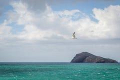 Saaidia海岛和波浪 免版税库存照片