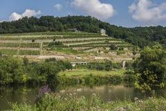 Saale Unstrut vin Naumburg Royaltyfri Bild