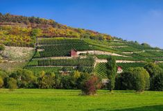 Saale Unstrut vineyards Royalty Free Stock Photography