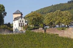 Saarburg - Vineyards Royalty Free Stock Photos