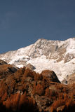 Saas fee forest autumn Stock Photos