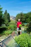 Sałatka w jarzynowym ogródzie Fotografia Royalty Free