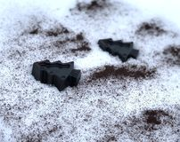 Sabão feito a mão do café com ervas, árvores na neve branca imagem de stock royalty free